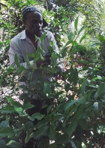 citrus pruning
