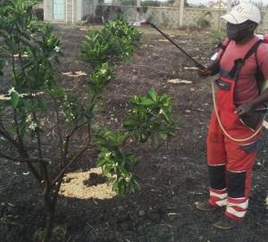 citrus spraying1